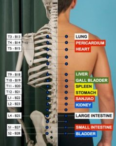 Picture of the spine with back transporter points